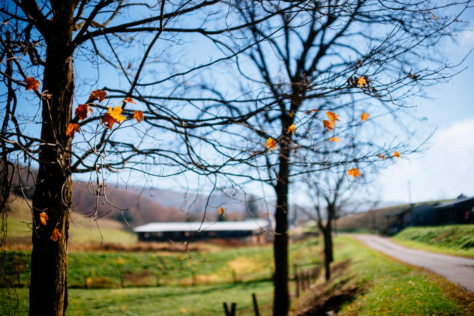 larew farm greenville west virginia