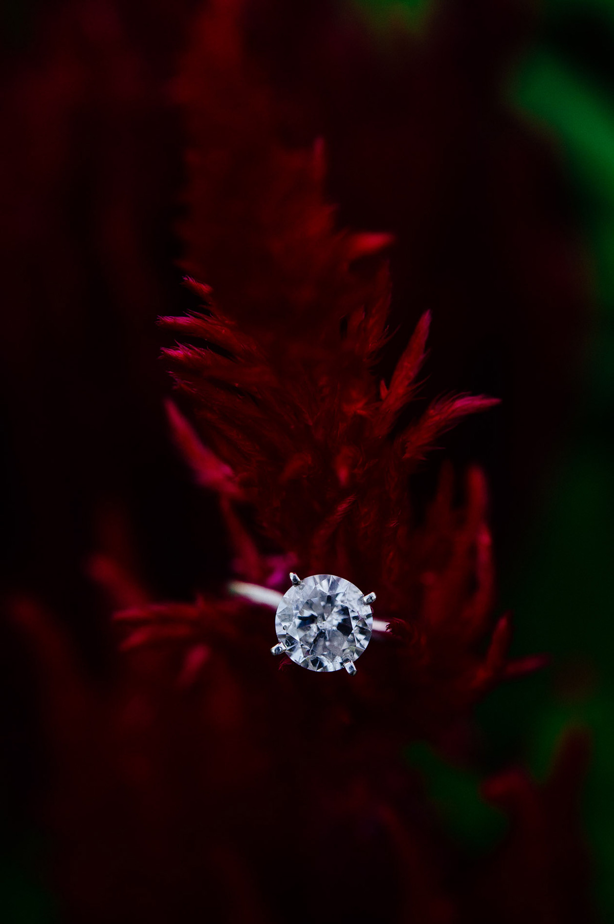 engagement ring photo solitaire