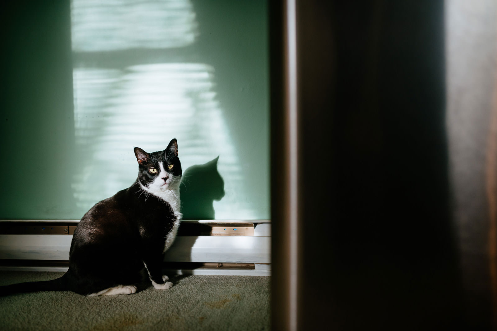 black and white cat sitting in sun