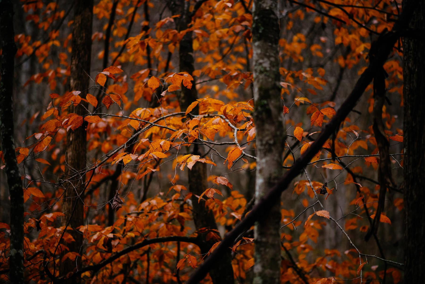 brilliant foliage autumn in west virginia