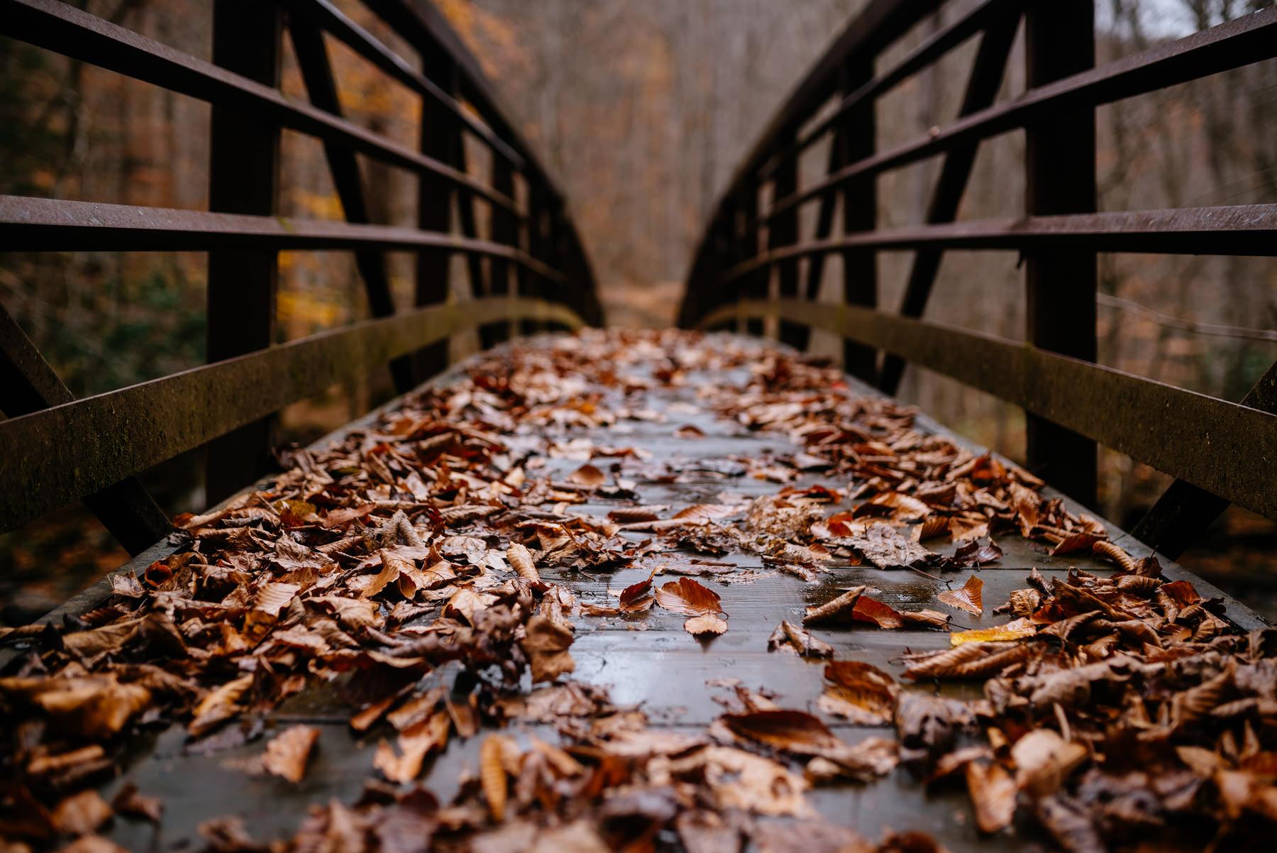 bridge covered in fall leaves wv