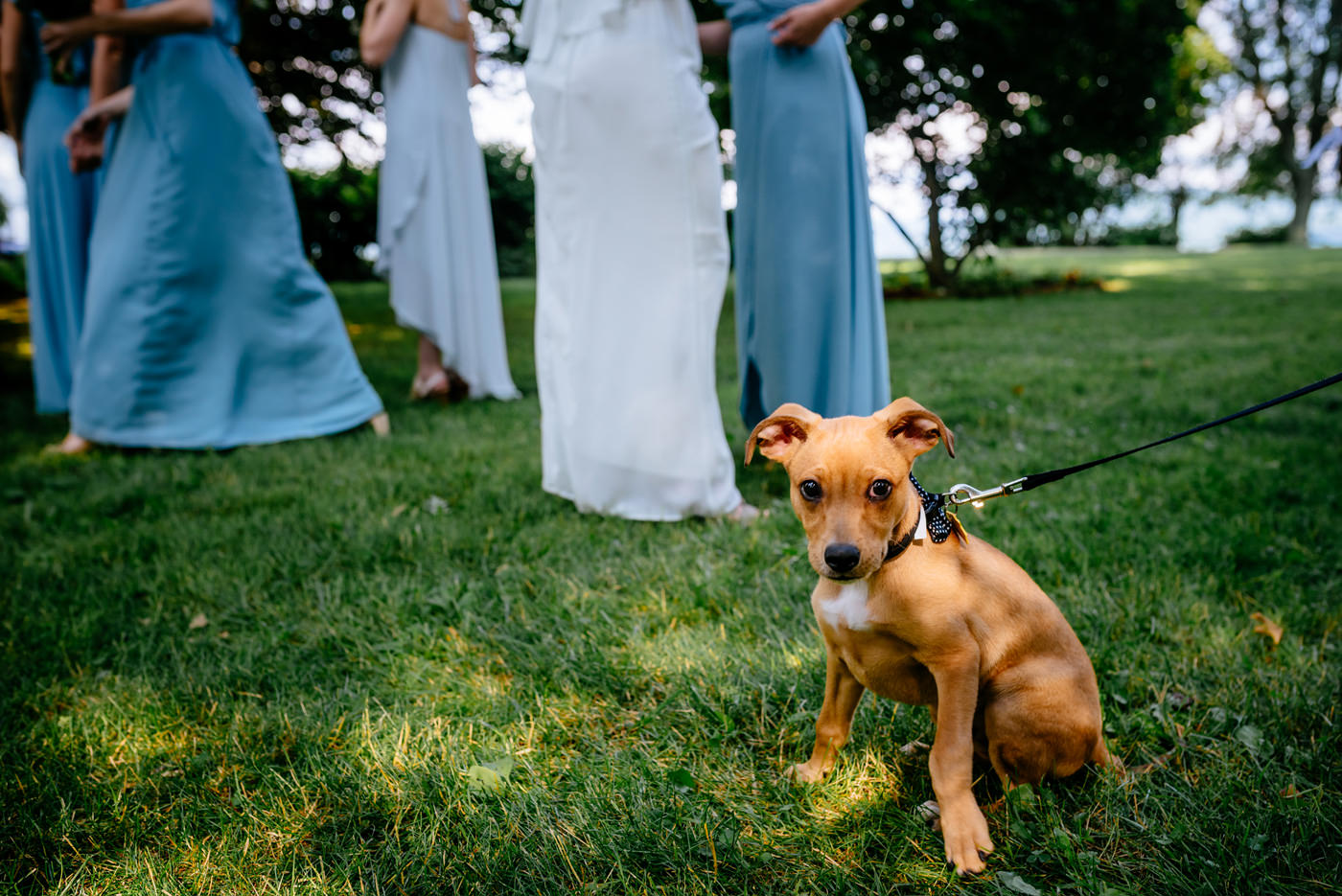 wedding ceremonies with puppies