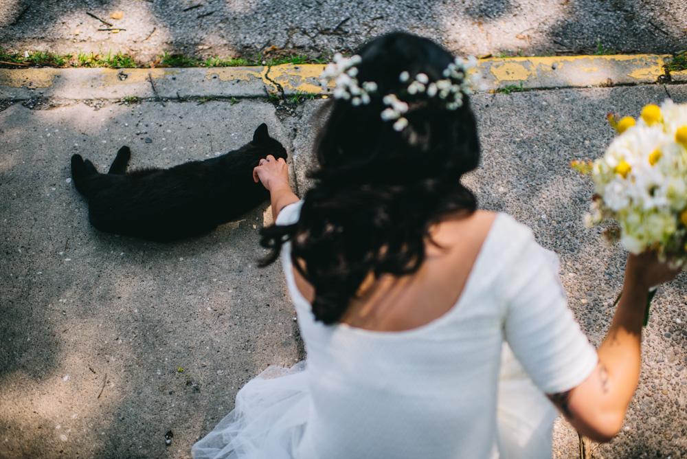 bride pets cat charleston west va
